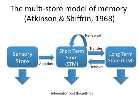 multi store model of memory