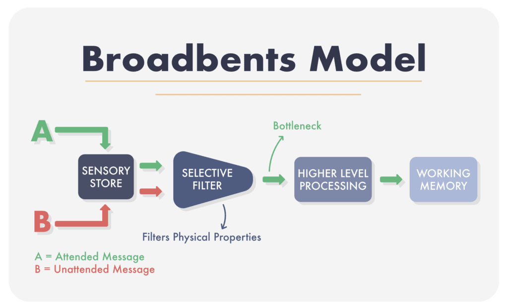Broadbents Filter Model of Attention