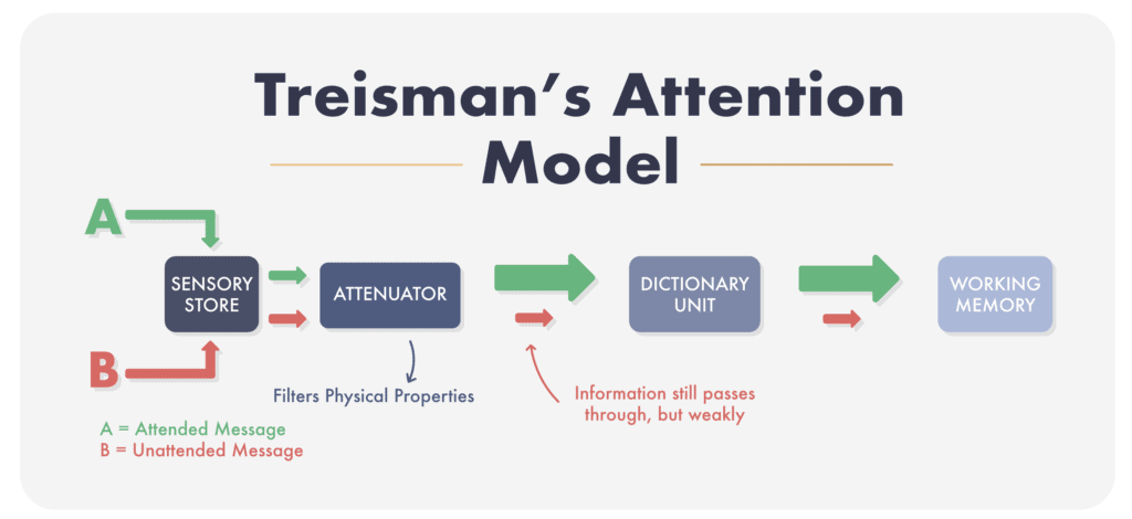Treismans Attenuation Model of Attention